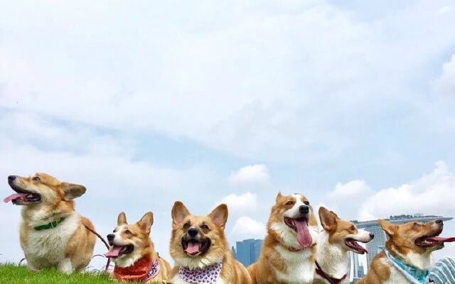 Countdown Pawty: 5 Pet-Friendly Venues in Singapore to Celebrate the New Year