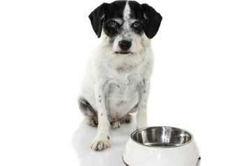 Dog Food Aggression: What It Is And How To Prevent It