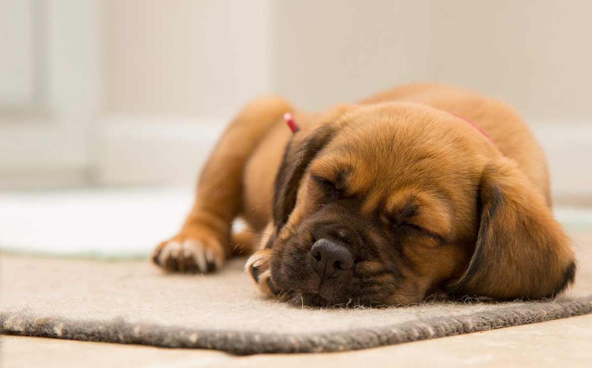 Doggy Distress: 6 Stress Signs to Look Out For