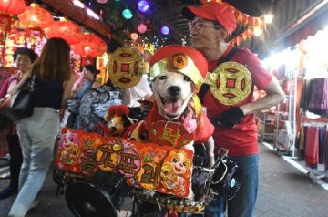 Dressing Up for CNY? Here's a Guide to Introducing Costumes to Your Pet