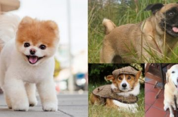 Farewell Boo: Remembering the Internet Doggos