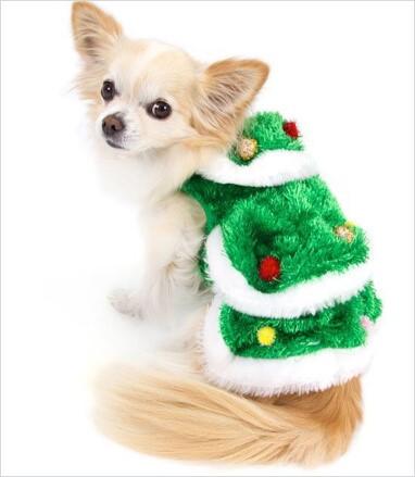 Festive Fashion: 6 Pet Christmas Costumes