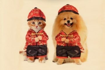 Festive Fun: 6 Chinese New Year Costumes for Your Pet