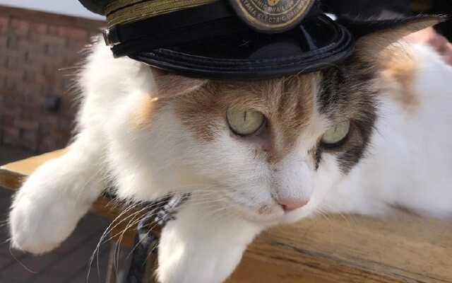 Furry Staff: 5 Animals with Actual Jobs