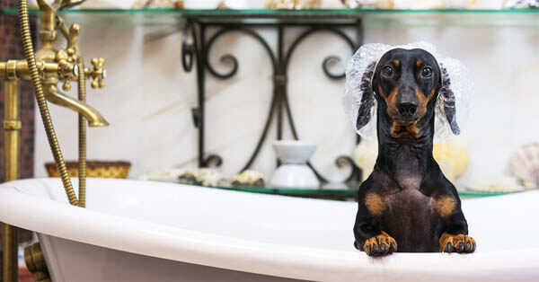How-To: Finding the Perfect Pet Groomer
