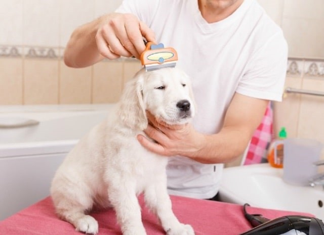 How-To: Preparing Your Pet for Its First Grooming Session