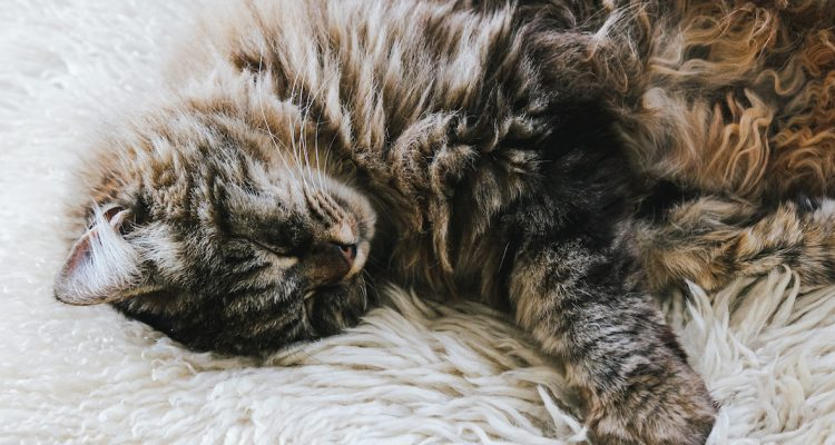 How to Tell if Your Cat Has Kidney Problems