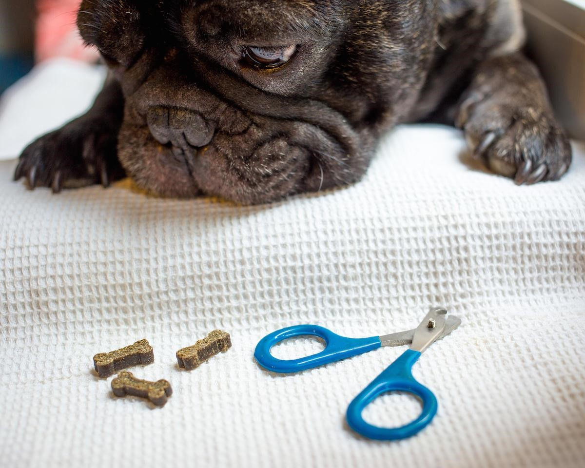 How To Trim Your Dog's Nails Safely Without Stress