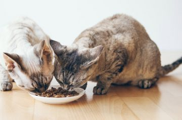 PowerCat – The Premium Halal Dry Cat Food for Busy Cat Owners