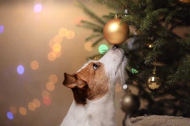 Save the Tree! Tips for Pet-Proofing Your Christmas Tree