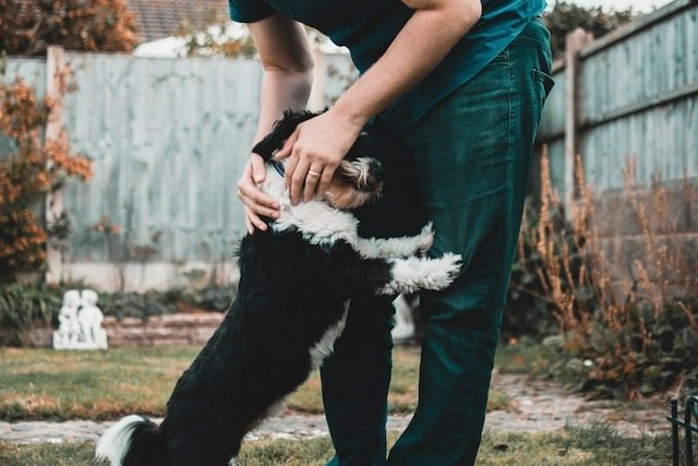 Super Senior: 5 Reasons to Adopt Elderly Pets