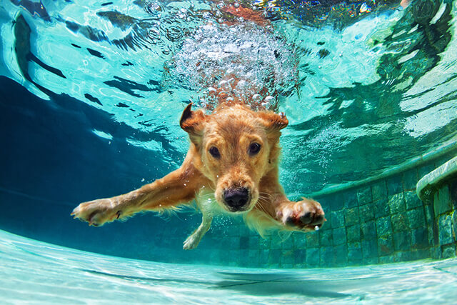 Understanding Dog Hydrotherapy and Its Benefits