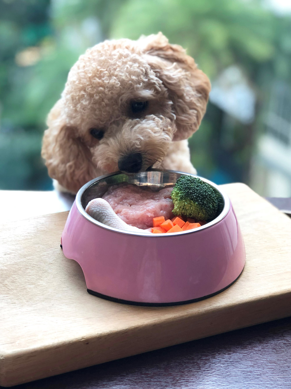Raw Diet Recipes for Dogs: Prepare Healthy & Tasty Meals With Sproutfore