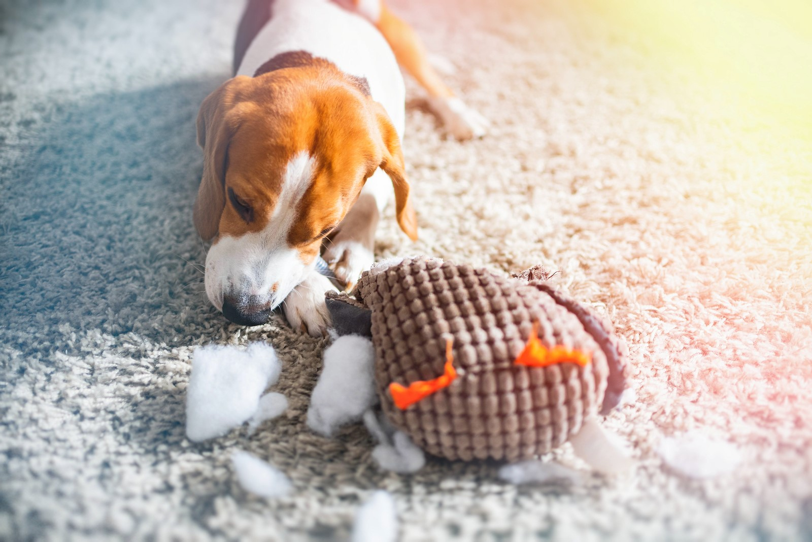 What First-Time Dog Owners Must Consider When Buying Toys for Your Pet