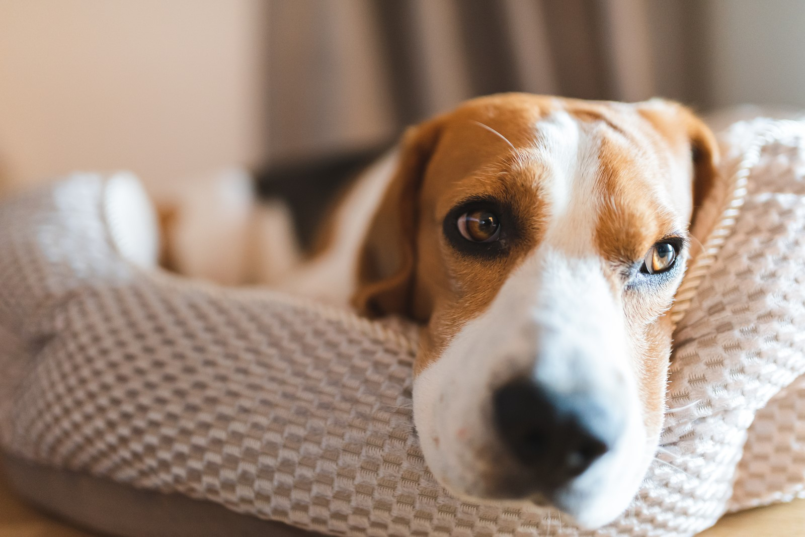 What Your Pet's Behaviour Say About Its Well-Being