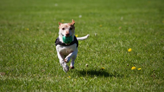 Keep Your Pet Active with These 6 Pet Workouts