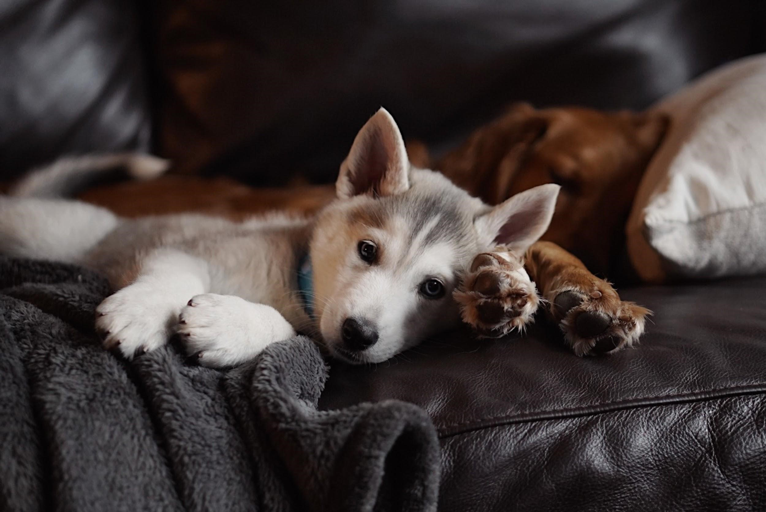 4 Important Things to Take Note of When Adopting a Dog