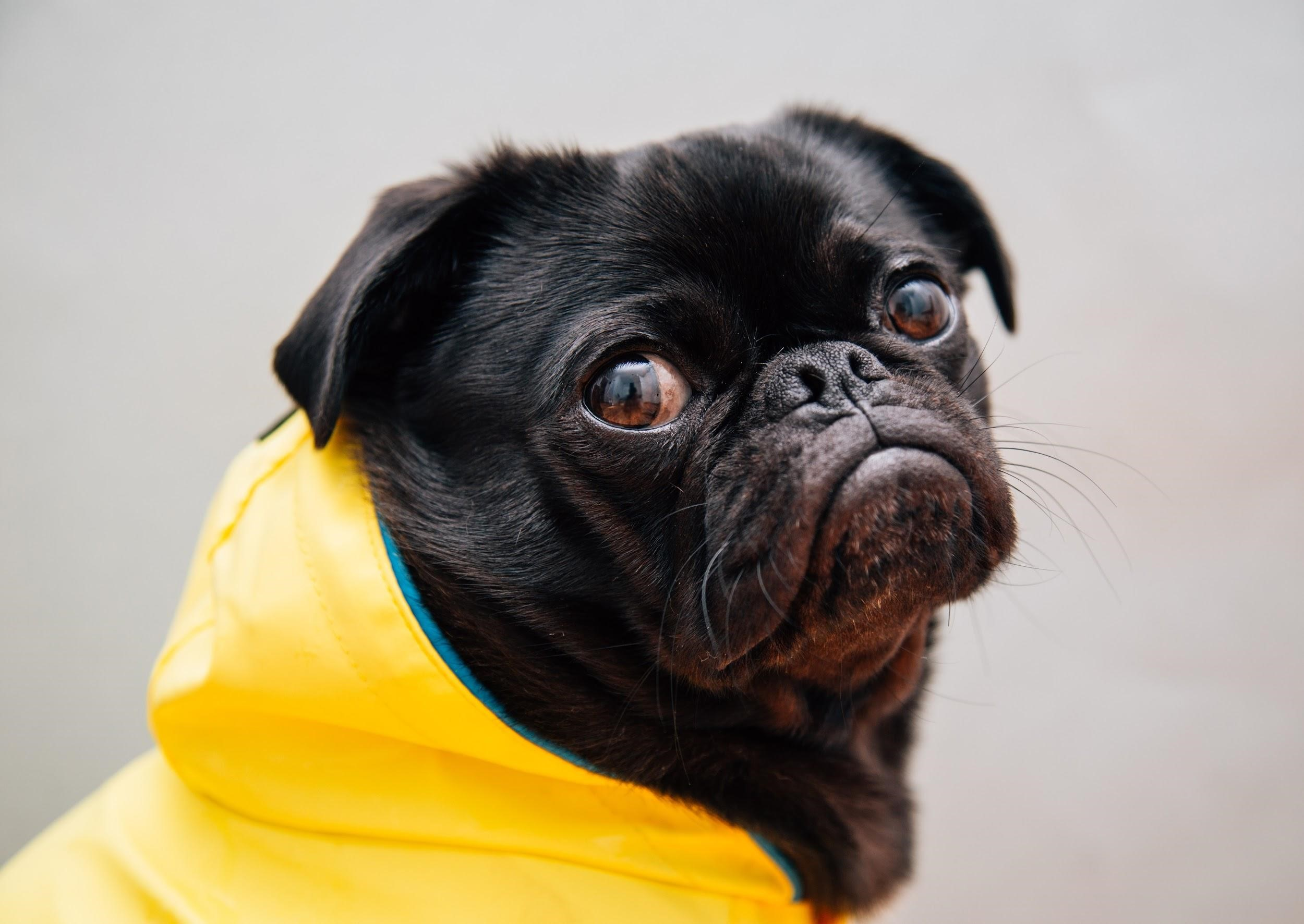 4 Precautions for Pet Owners Who Walk Their Dogs Rain or Shine