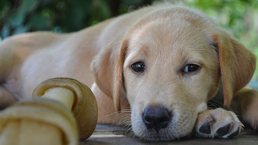 4 Reasons Why You Shouldn't Give Your Dogs Rawhide