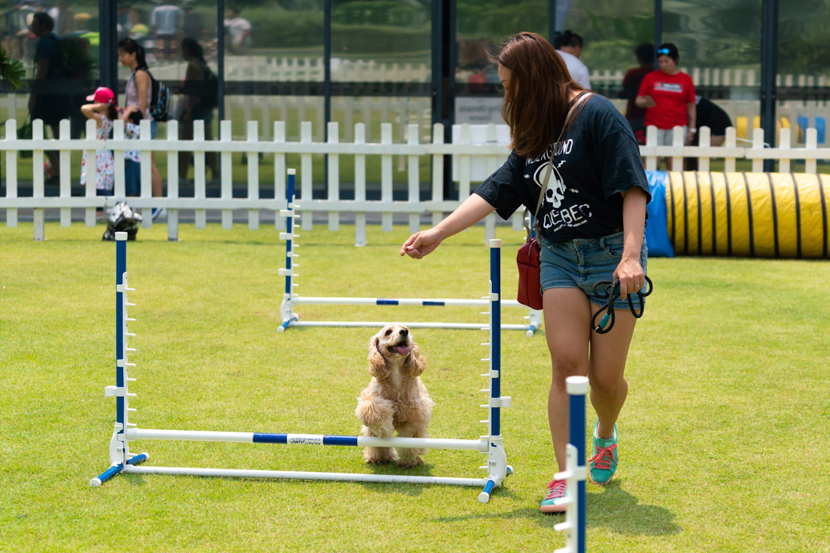 5 Reasons Why You Should Join the Fun at NParks' Parks Festival & Pets' Day Out Event