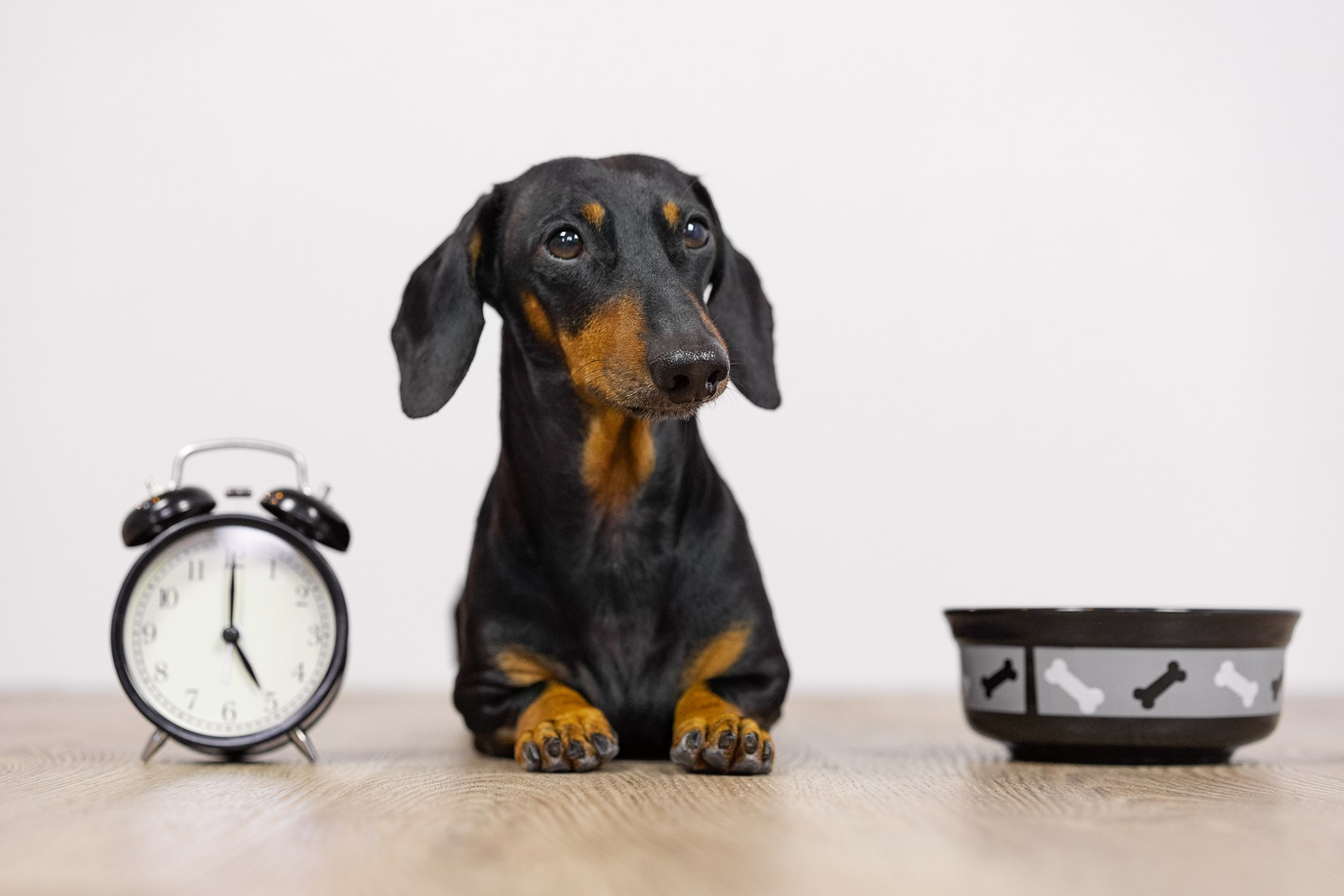 5 Tips to Train Your Dog Properly