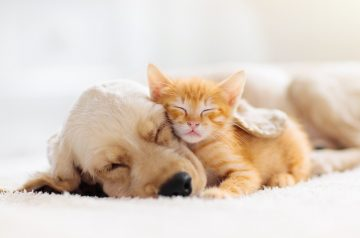 7 Benefits of Pulsed Electromagnetic Field (PEMF) Therapy For Your Pet