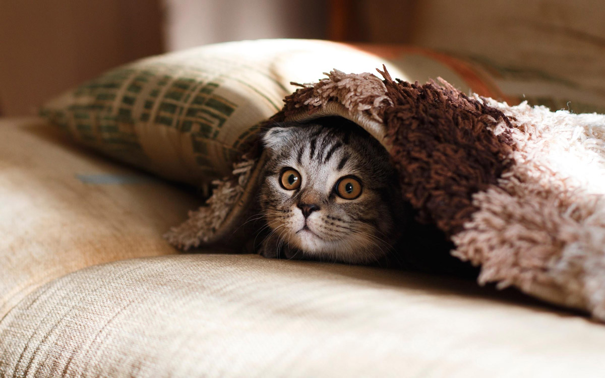 7 Ways to Prepare Your Home for A Cat in Singapore