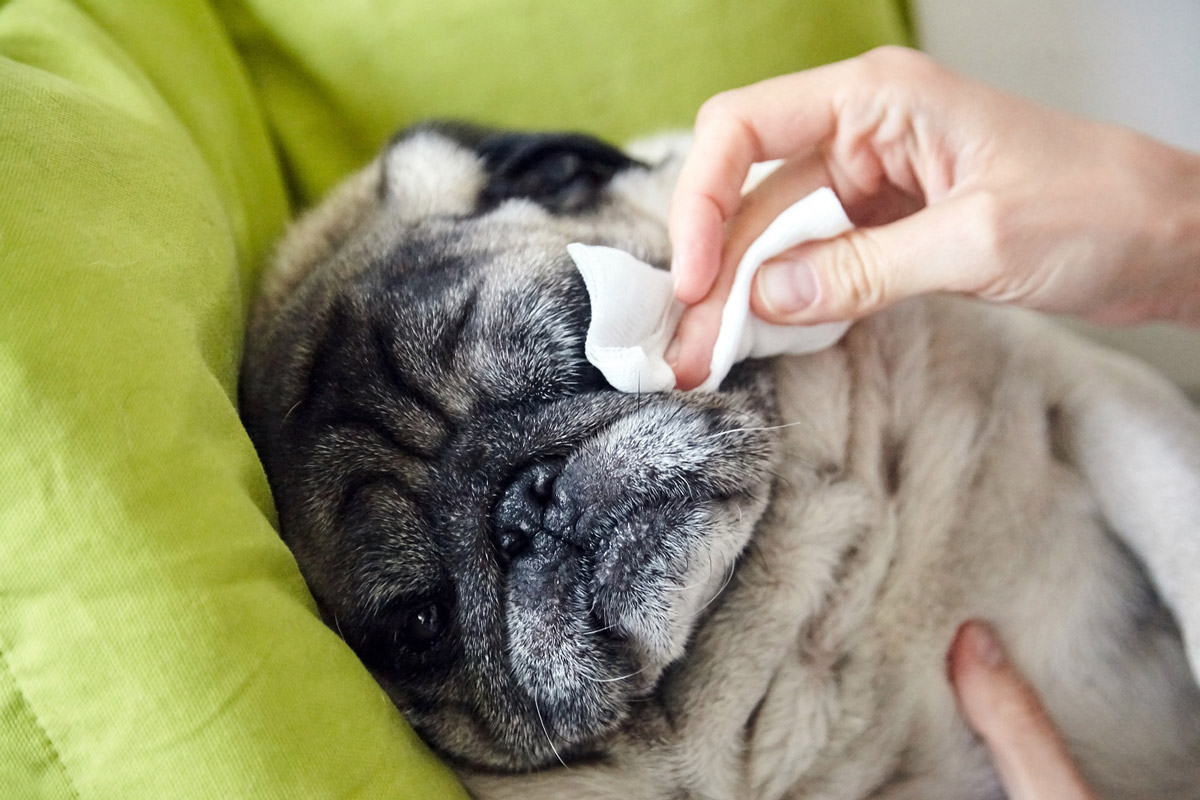 For Furry Friends: 6 Common Pet Issues That P.A.W.S Tackles