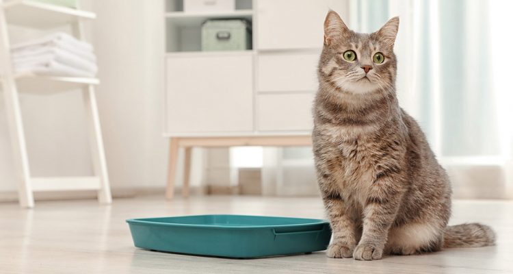 Why Is Your Cat Not Using Its Litter Box?