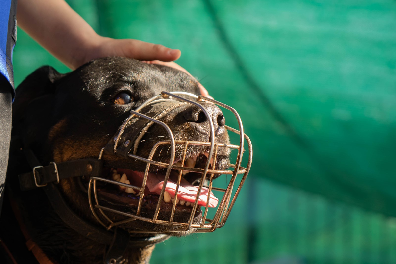 A Guide on How to Properly Handle Aggressive Behaviour in Dogs