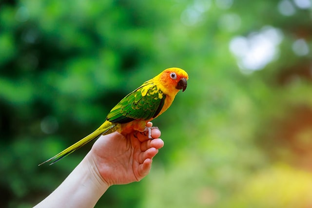 A Guide to Parrot Training