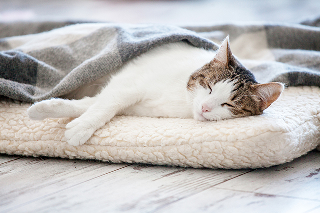 Cat Colds: Symptoms to Look Out For