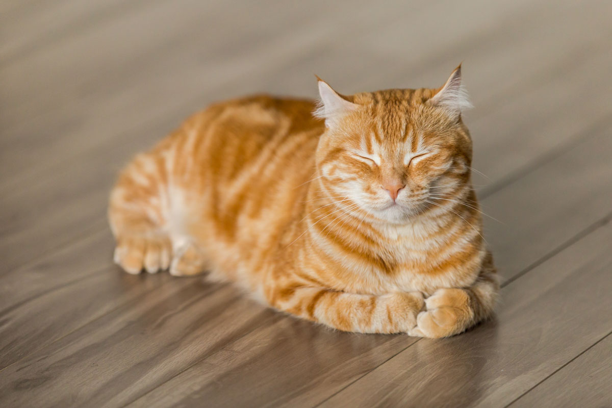 Feline Body Language: Understanding Your Cat's Behaviour