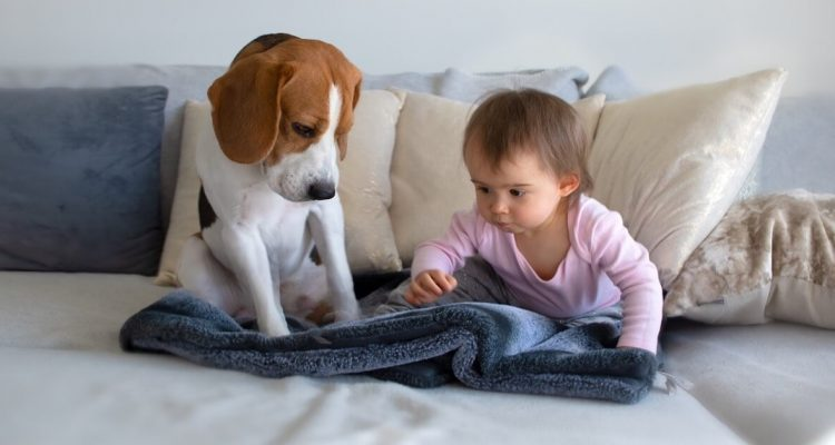 How To Introduce Your Dog To Your Newborn