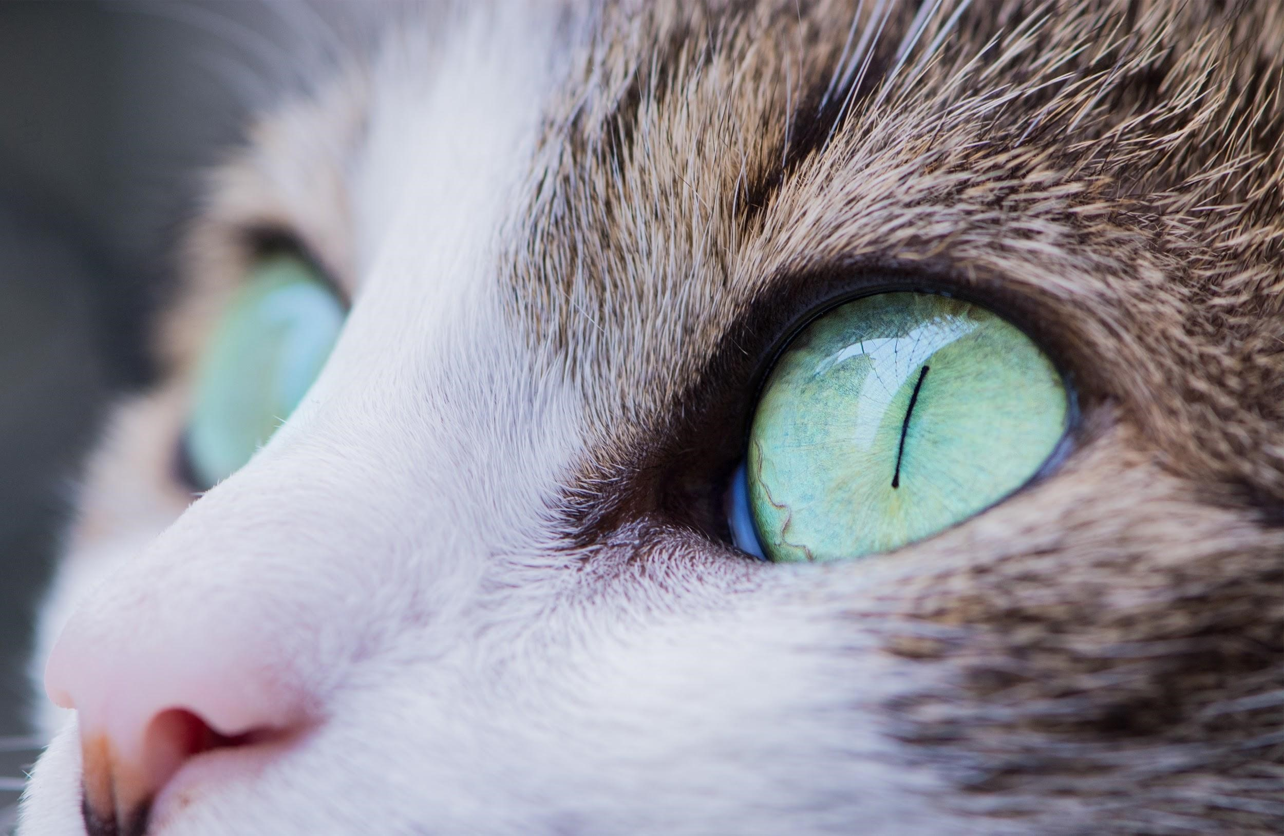 How To Read Your Cat's Mind Through Its Eyes