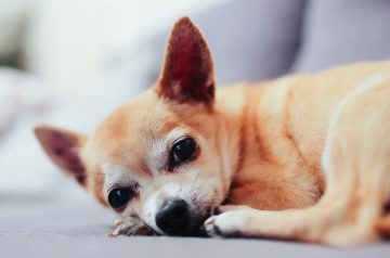 Old-Age In Dogs: 4 Important Signs That Your Dog is Aging
