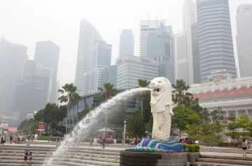 Pet Care Tips For Haze Season in Singapore