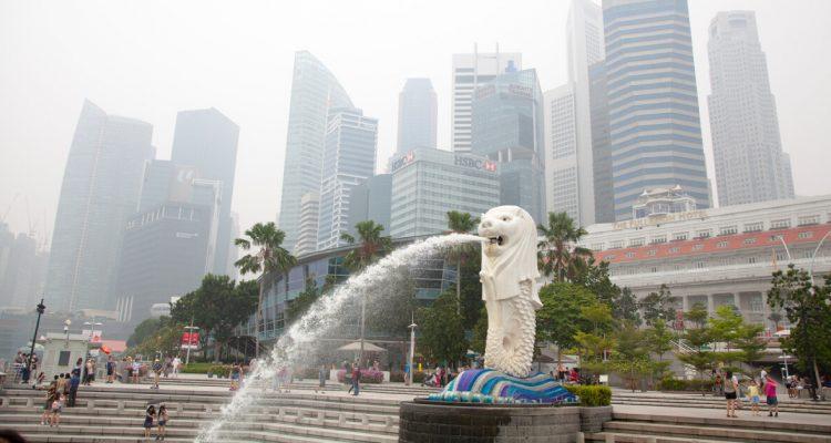 Pet Care Tips For Haze Season in Singapore