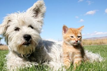 The Ultimate Guide to Cat & Dog Tail Language