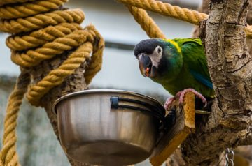 4 Benefits of Feeding Your Bird A Pellet Diet Instead of Seeds