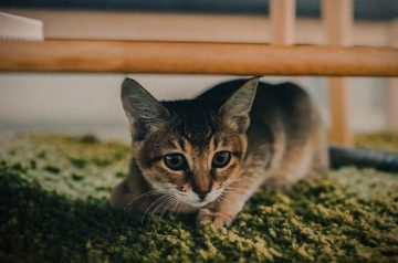 Cat Anxiety: A Pet Parent's Guide To Calming Down Your Kitty