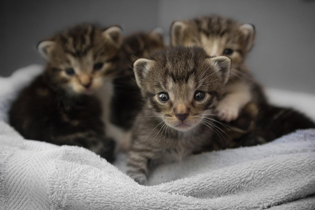 Cat Labour: How To Help Your Cat Give Birth & Prep For Newborn Kittens
