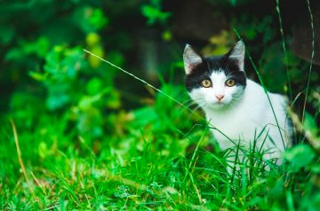 How To Protect Your Cat From Outdoor Dangers