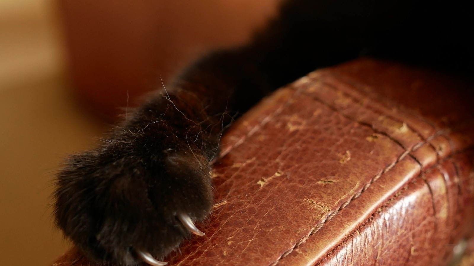 5 Most Common Cat Behavioural Problems & How to Solve Them