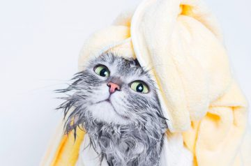 Cats & Baths: Do They Need Them & Other Advice
