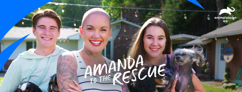 A Conversation With Amanda Giese, Animal Rescuer