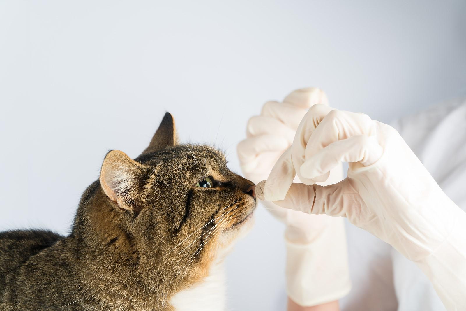 Cat Diarrhoea: Causes & Treatment Alternatives