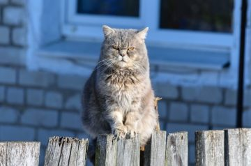 Cat Territorial Aggression: The Go-To Guide For Furparents