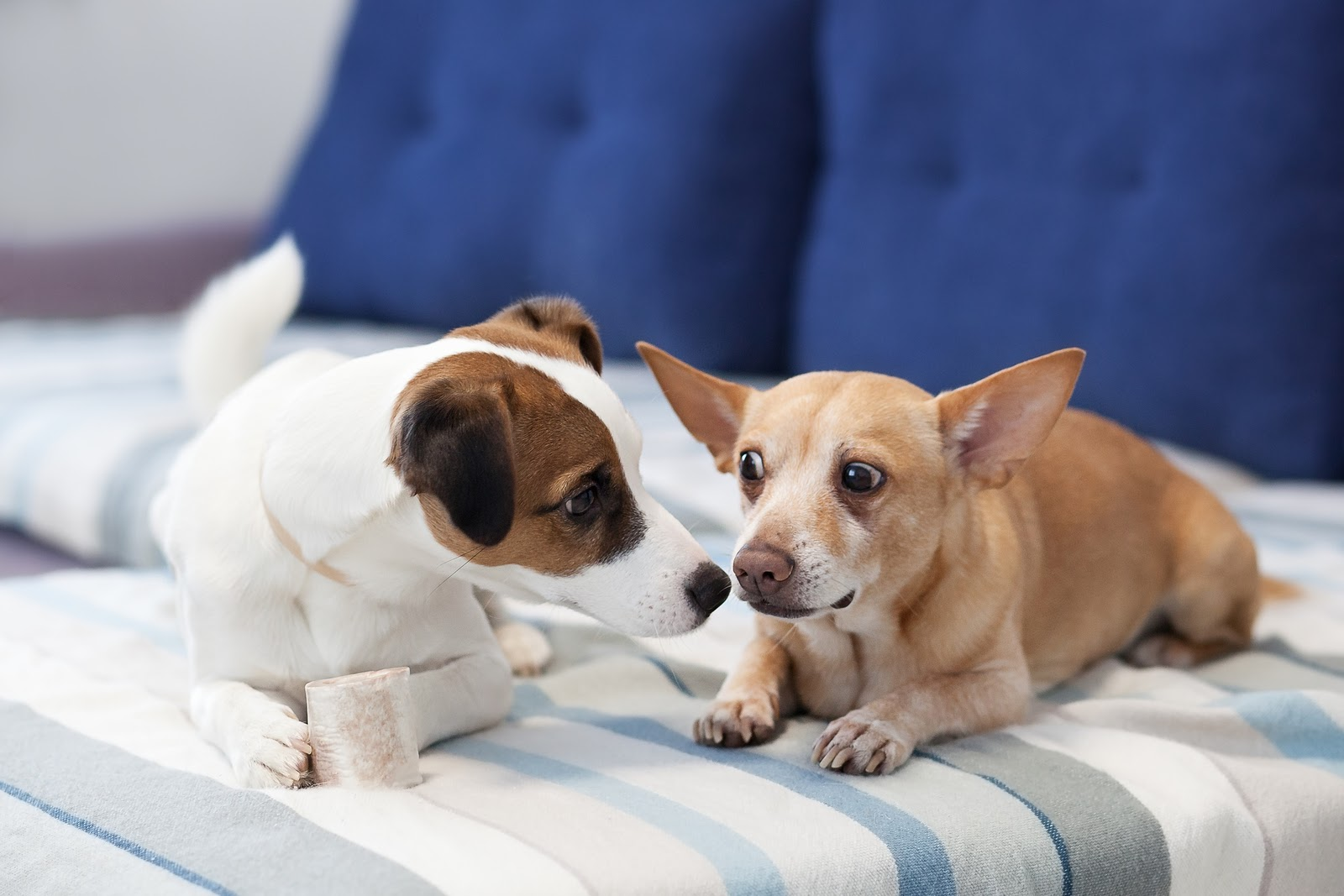 The More The Merrier: Why Two Dogs May Be Better Than One