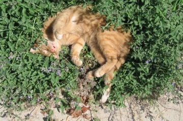 The Wondrous Catnip: 3 Reasons Why Kitties Love It